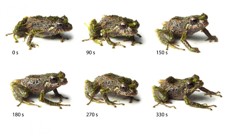 Morphing frog